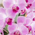 Facts about Orchids